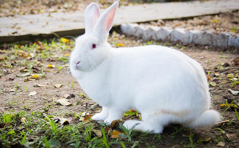 Você é recebido pelo coelhinho que fica solto na Pousada: ninguém resiste ao ataque de fofura! - Foto: Carol Lá Lach